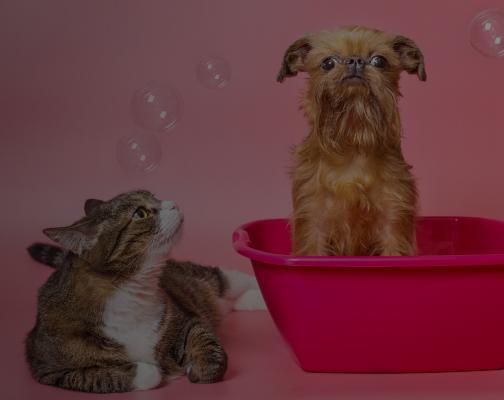Belleza y Salud para tu mascota