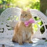 cat-2358830_640-min.jpg