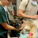 veterinary-85925_640-min.jpg